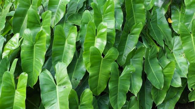 Green leaf plant backgrounds