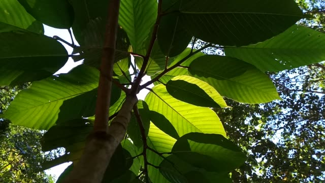 green leaf tree with sunlight – film