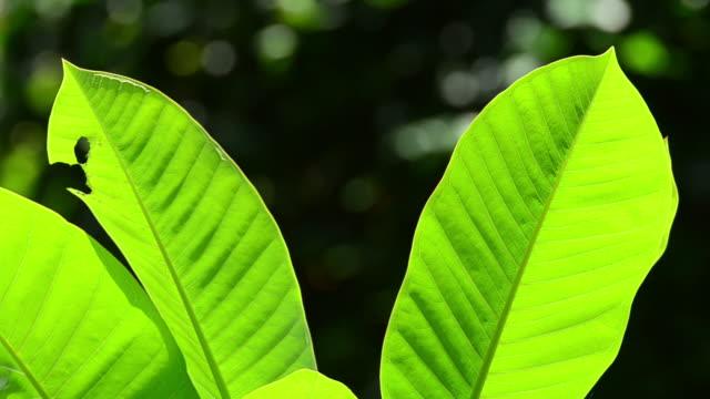 Green leaf Green leaf Vibrant Color. leaf vein stock videos & royalty-free footage
