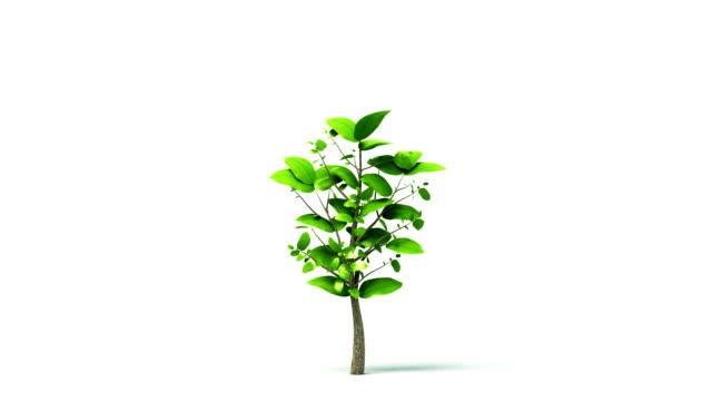 Green leafs tree growing, HD, alpha