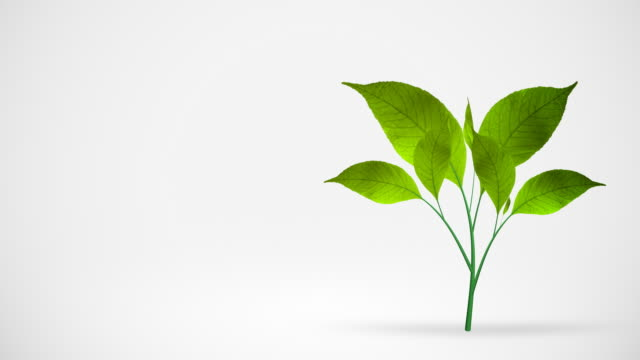 green leafs tree growing on white background - plants stock videos & royalty-free footage