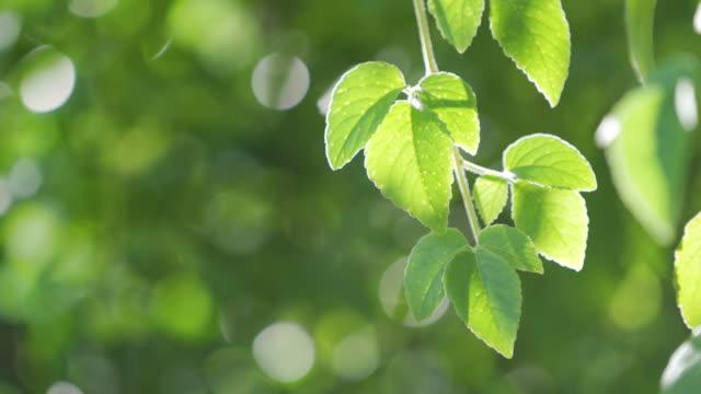 Green leave in jungle