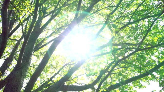 緑の葉 4 k - 木漏れ日点の映像素材/bロール