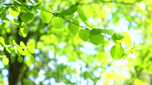Green leaves -4K- video