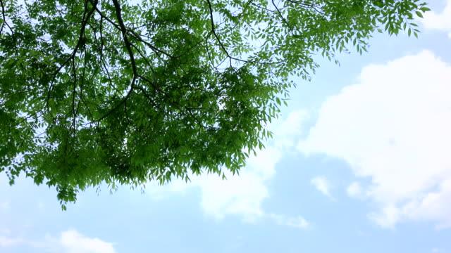Green leaves -4K- video