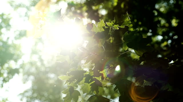 緑の葉と太陽 - 木漏れ日点の映像素材/bロール