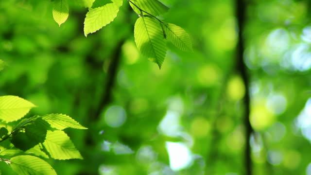 녹색 잎 배경기술 hd - 잎 스톡 비디오 및 b-롤 화면