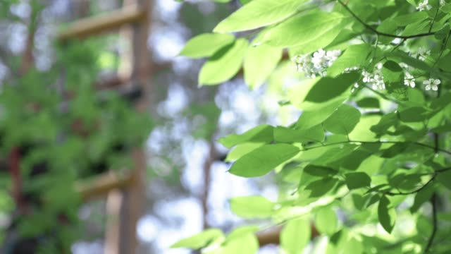 Green leaves background. Stock. Green leaves of trees in the Park – film