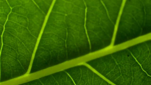 зеленые листья фон. - куст стоковые видео и кадры b-roll