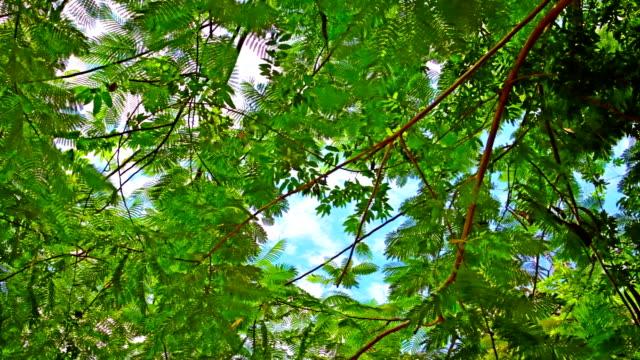 vidéos et rushes de feuilles vertes dans le ciel - nervure