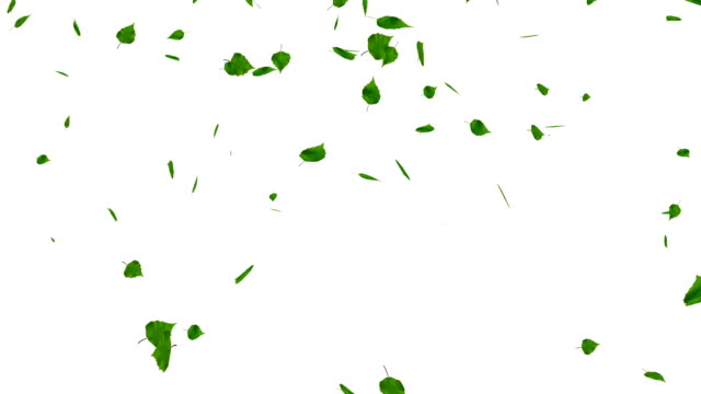Green leaves isolated on white, with matte, loop. video