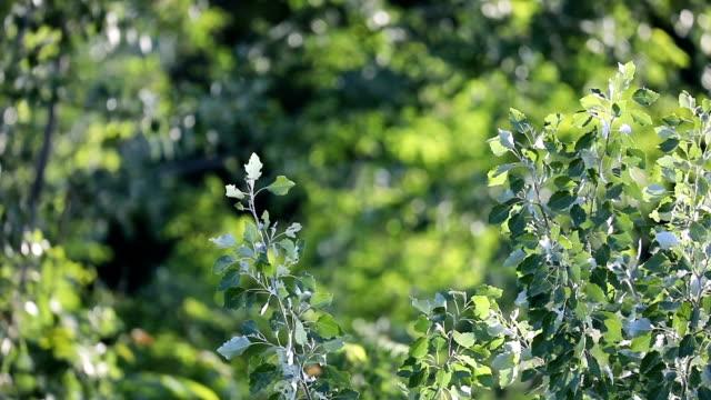 yavaş çekimde ağacın yeşil yaprakları - sale stok videoları ve detay görüntü çekimi