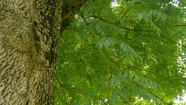 Grüne Blätter an einem Baum. – Video
