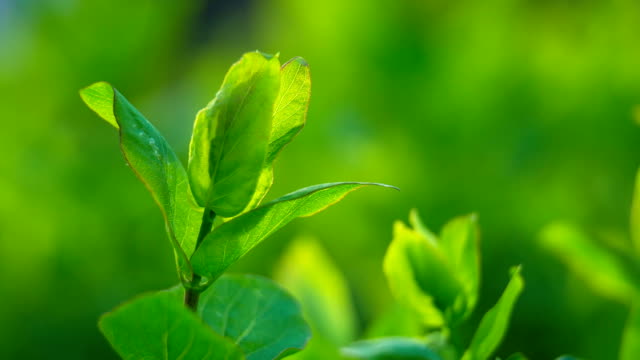 green leaves on green background, closeup - soft focus video stock e b–roll