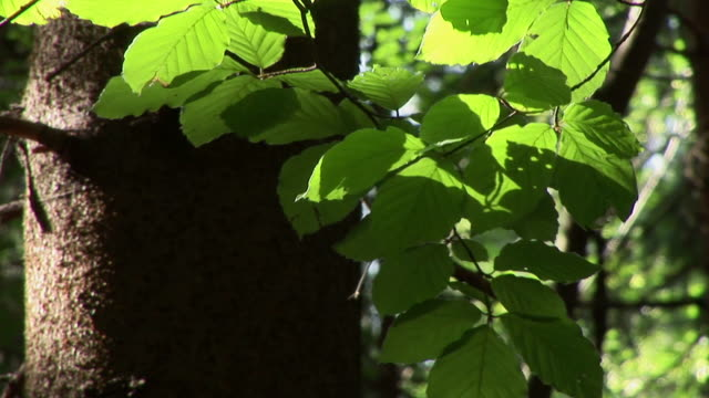 HD: Green leaves video