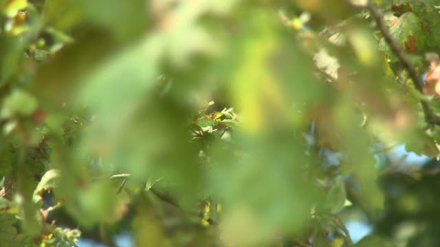 HD: Green leaves  rack focus stock videos & royalty-free footage