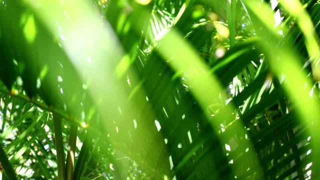 grüne blätter - palme stock-videos und b-roll-filmmaterial
