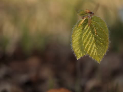 green leaves - 枝 植物部分 個影片檔及 b 捲影像