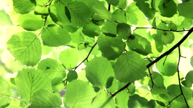 green leaves video