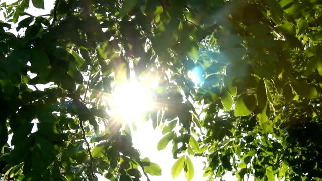 太陽の光と緑の葉 - 木漏れ日点の映像素材/bロール