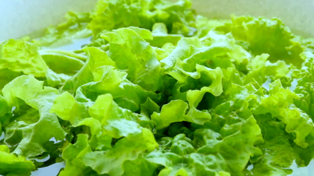green lettuce, close-up video