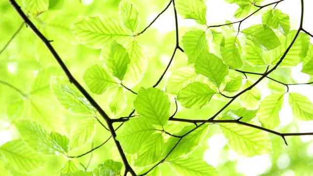 Liście Zielone światło naturalne tło. – film