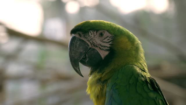 vidéos et rushes de oiseau vert d'ara dans le fond de nature - bec