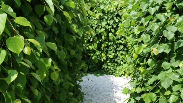 vidéos et rushes de labyrinthe vert dans le parc de ville - haie