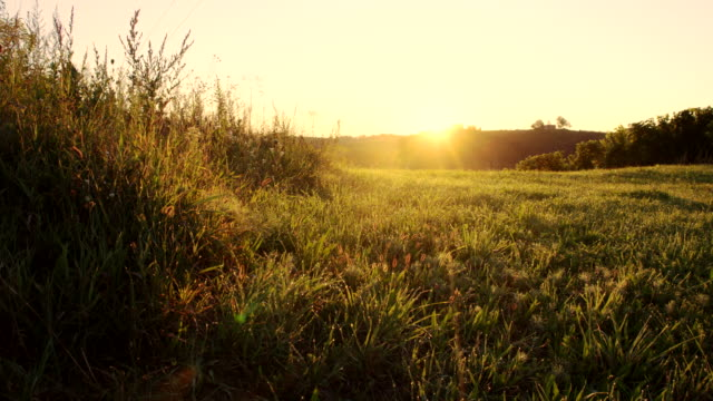 WS DS Green Meadow At Dawn video