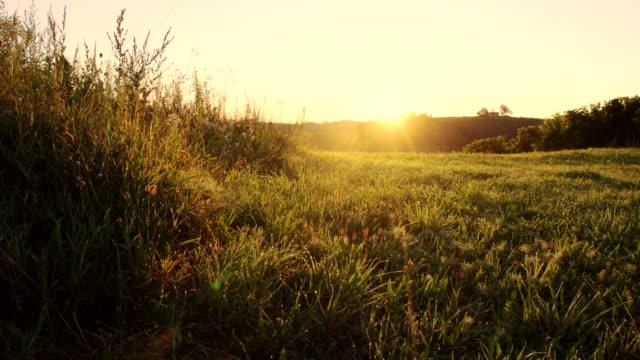 vidéos et rushes de ws ds green meadow à l'aube - vue en contre plongée