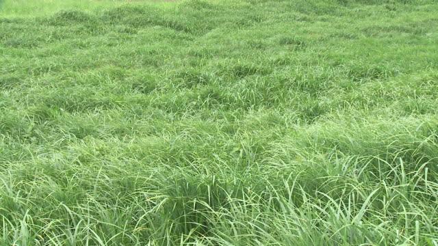 HD: Green meadow video