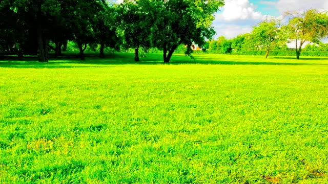 Green meadow Green grass on sunny meadow ornamental garden stock videos & royalty-free footage