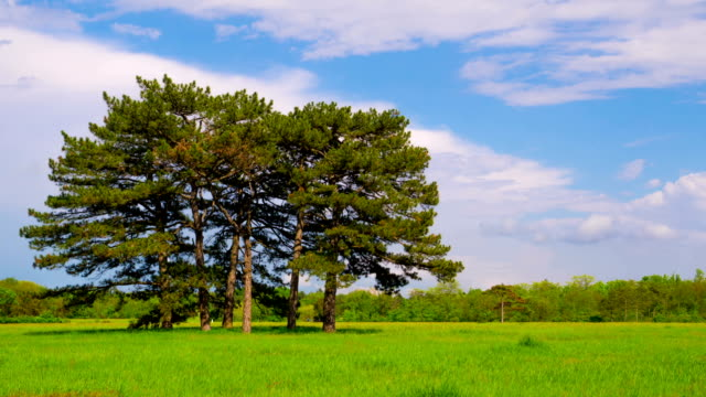 Green Meadow with Six Pines video