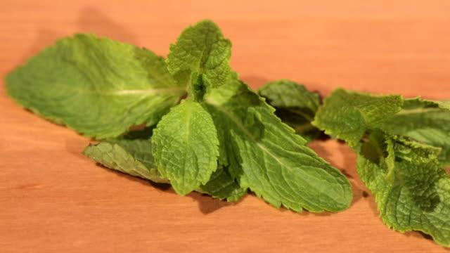stockvideo's en b-roll-footage met groene munt plant op een houten tafel - lipbalsem