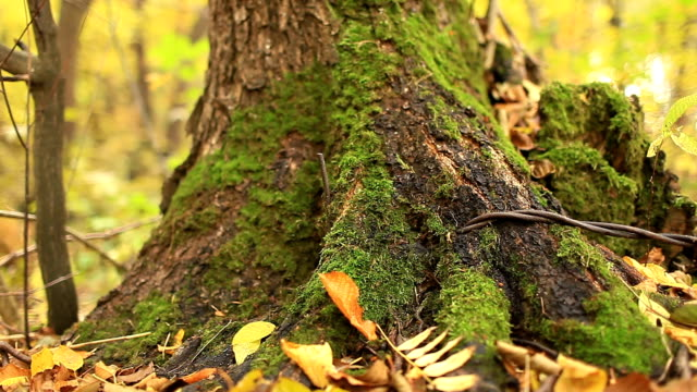 green moss autumn forest - дубовый лес стоковые видео и кадры b-roll