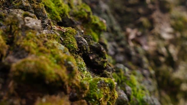 green moss, close up. selective focus - muschio flora video stock e b–roll