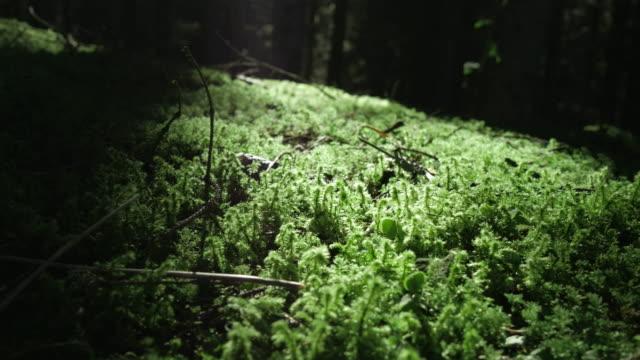 grön mossa i skumma underwood - torv bildbanksvideor och videomaterial från bakom kulisserna
