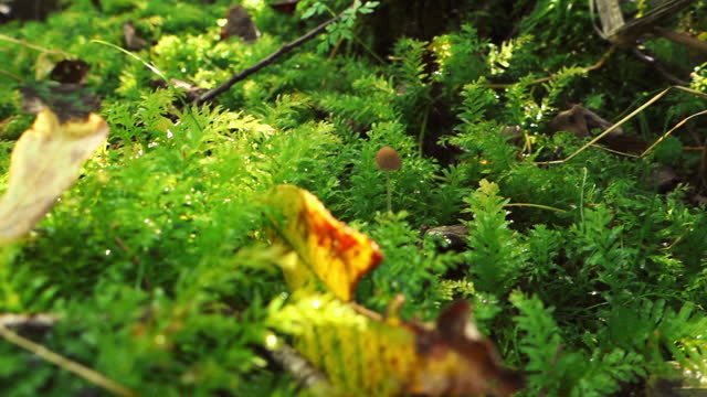 Green moss in the summer forest. Close-up.