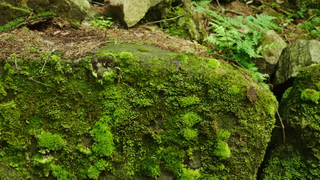 Green moss on a large rock in the forest. Wet climate, north side