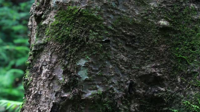 Green moss tree fern in rain forest area in water fall at natural park. camera dolly past tree