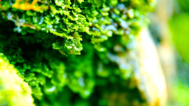 grön mossa - torv bildbanksvideor och videomaterial från bakom kulisserna