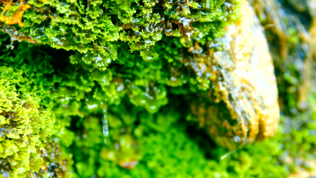 green moss - muschio flora video stock e b–roll