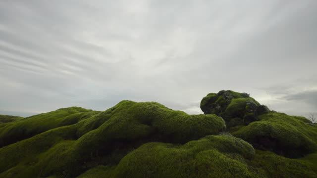 grön mossa, island. - torv bildbanksvideor och videomaterial från bakom kulisserna