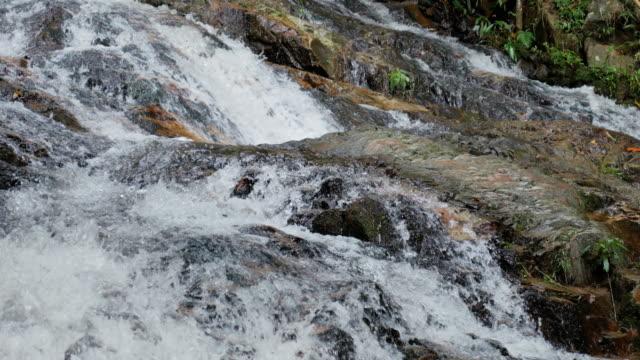 緑の自然クリーク、グリーン ストリーム自然映像コンセプト - 湧水点の映像素材/bロール