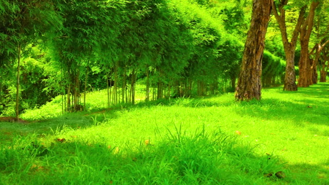 Green nature video