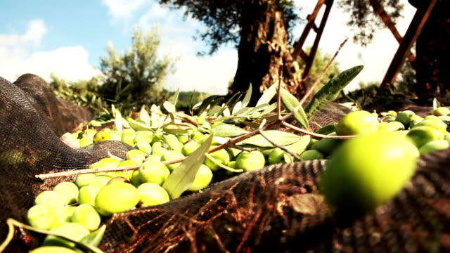 Green Olive video