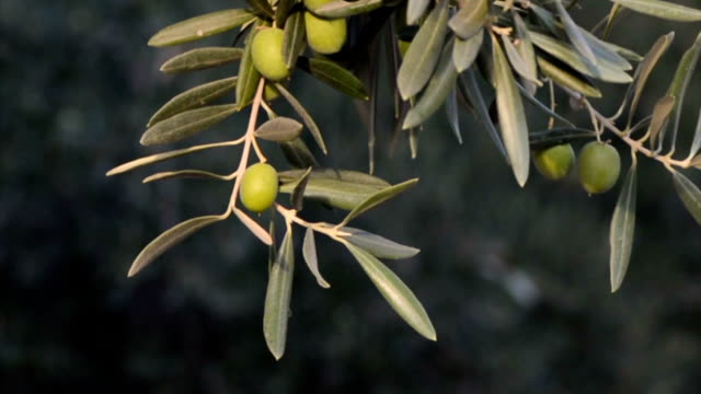 green olives video