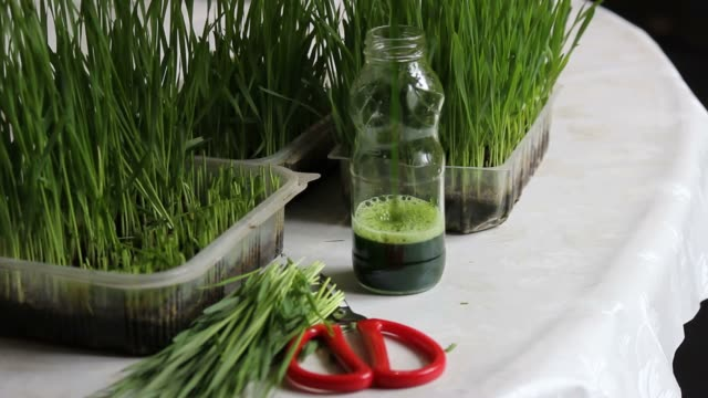 Vert bio d'herbe de blé - Vidéo
