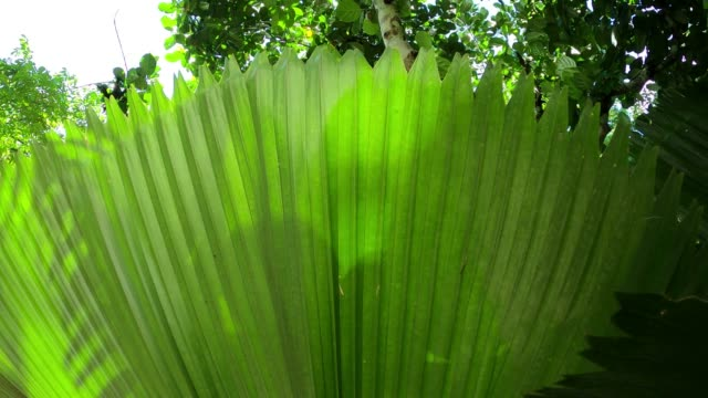Green palm leaf with sunlight