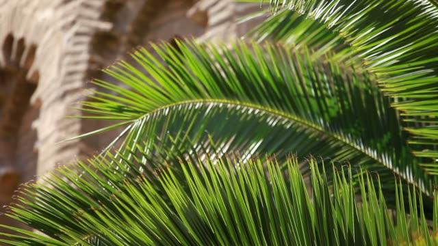 green palm löv i vinden och arkitektoniska bakgrund. - städsegrön växt bildbanksvideor och videomaterial från bakom kulisserna